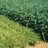 Bio Fertilizers