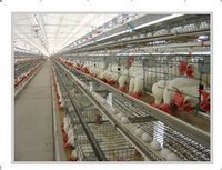Commercial Layer Cages