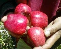 Organic Fresh Fruits