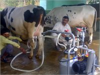 Milk Dairy Products Machinery